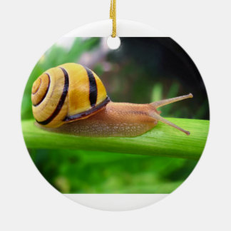 Brown Lipped Snail Cepaea Nemoralis Grove Snail Christmas Ornament