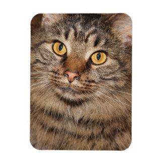 BROWN LONG HAIR TABBY CAT MAGNET