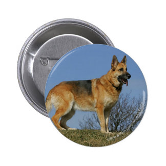 Brown Long Haired German Shepherd 2 6 Cm Round Badge
