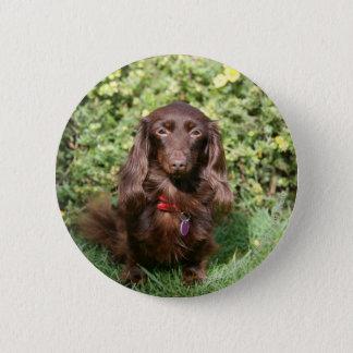 Brown Long-haired Miniature Dachshund 6 Cm Round Badge