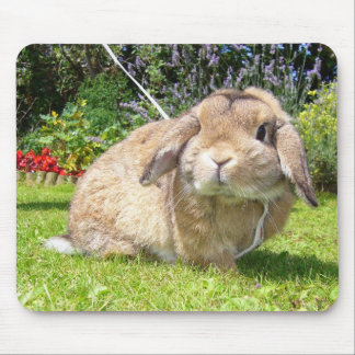 Brown lopped ear rabbit with lavender mouse pad