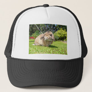 Brown lopped ear rabbit with lavender trucker hat
