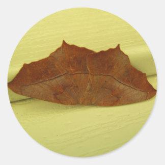 Brown Moth ~ sticker