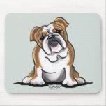 Brown n White English Bulldog Sit Pretty