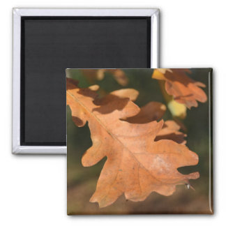 Brown Oak Leaf Magnet