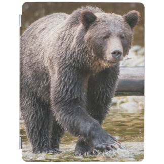 Brown Or Grizzly Bear (Ursus Arctos) Fishing iPad Cover