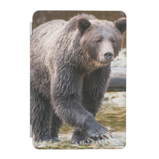 Brown Or Grizzly Bear (Ursus Arctos) Fishing iPad Mini Cover