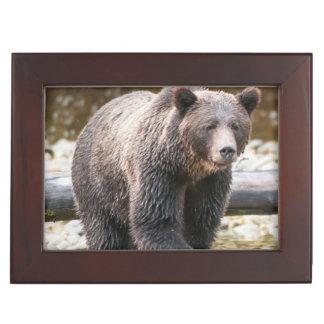 Brown Or Grizzly Bear (Ursus Arctos) Fishing Keepsake Box