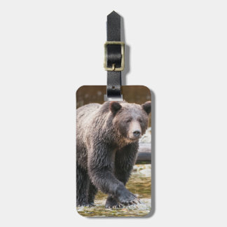 Brown Or Grizzly Bear (Ursus Arctos) Fishing Luggage Tag