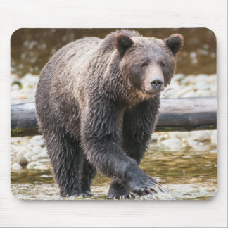 Brown Or Grizzly Bear (Ursus Arctos) Fishing Mouse Pad