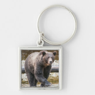 Brown Or Grizzly Bear (Ursus Arctos) Fishing Silver-Colored Square Key Ring
