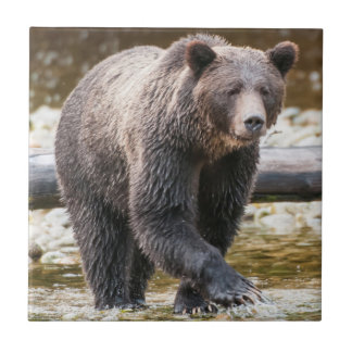 Brown Or Grizzly Bear (Ursus Arctos) Fishing Tile