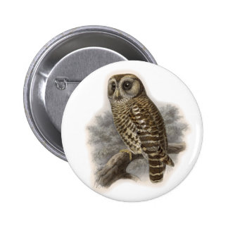 Brown Owl 6 Cm Round Badge