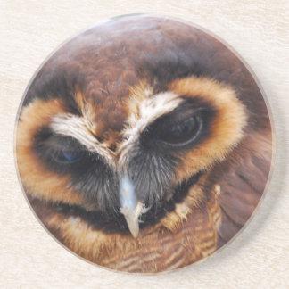 Brown Owl Coaster