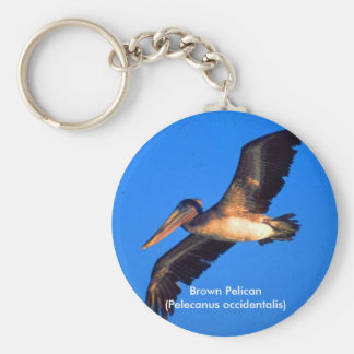 Brown Pelican (Pelecanus occidentalis) Key Chains
