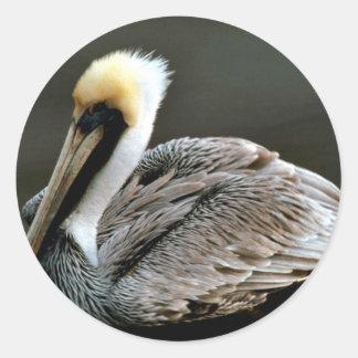 Brown pelican stickers