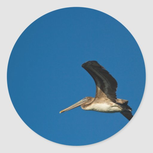 Brown Pelican Round Stickers