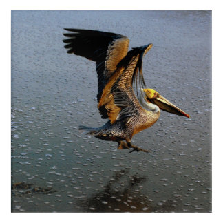 Brown Pelican Wall Art