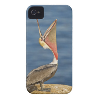 Brown Pelican with mouth open Case-Mate iPhone 4 Case