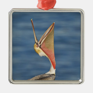 Brown Pelican with mouth open Christmas Ornament