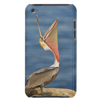 Brown Pelican with mouth open iPod Touch Cover