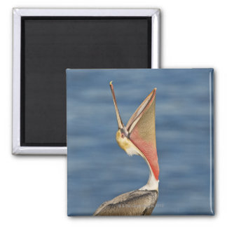 Brown Pelican with mouth open Square Magnet