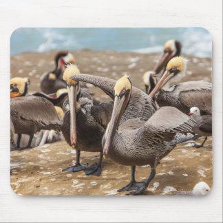 Brown Pelicans Ashore. La Jolla Cove, San Diego Mouse Mat