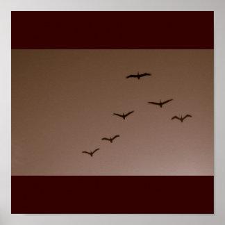 Brown Pelicans in Flight Galveston Texas Poster