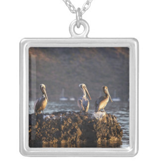 Brown pelicans on rock in Puerto Escondido near Custom Jewelry