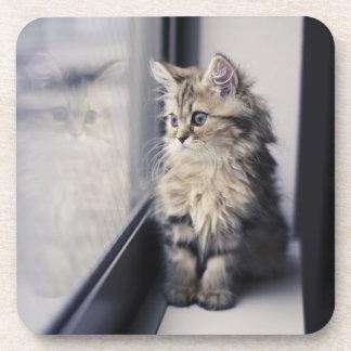 Brown Persian Kitten Looking Out Window Beverage Coasters