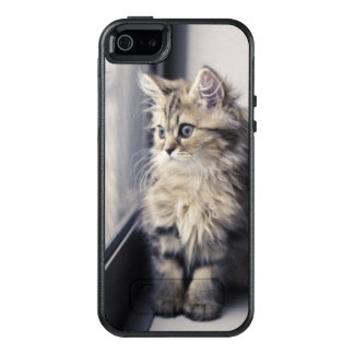 Brown Persian Kitten Looking Out Window OtterBox iPhone 5/5s/SE Case