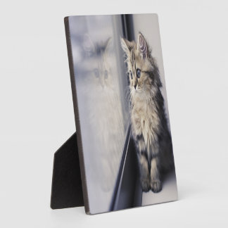 Brown Persian Kitten Looking Out Window Plaque