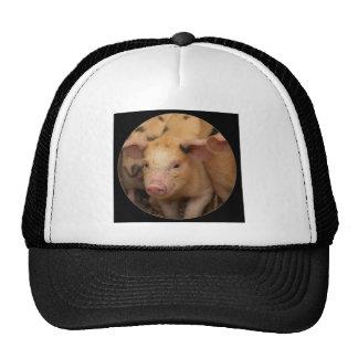 """""""Brown piglet"""" Hats"""