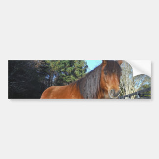 Brown pony turquoise Sky Bumper Sticker
