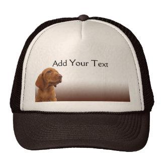 Brown Puppy on a Brown Gradient Cap