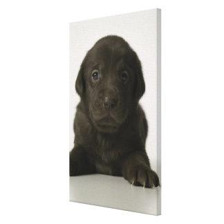 Brown puppy, portrait, close-up canvas print
