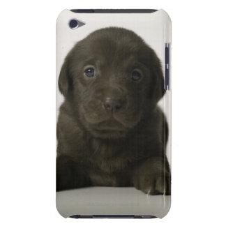 Brown puppy, portrait, close-up iPod touch case
