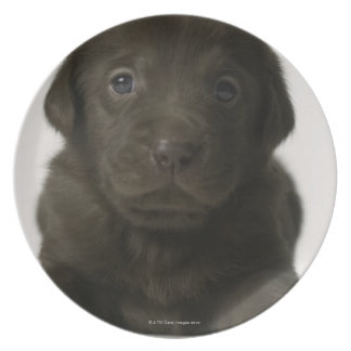 Brown puppy, portrait, close-up plate