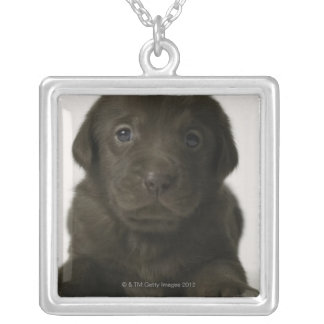 Brown puppy, portrait, close-up silver plated necklace