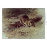 Brown Rat  1918 Greeting Card