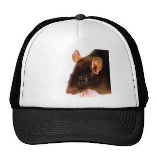 Brown Rat Trucker Hats