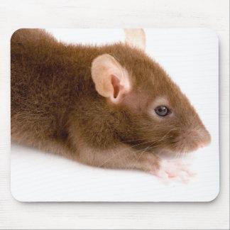 Brown Rat Mouse Mat