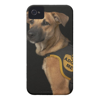 Brown rescue dog with adopt me vest iPhone 4 Case-Mate cases
