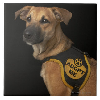 Brown rescue dog with adopt me vest tile