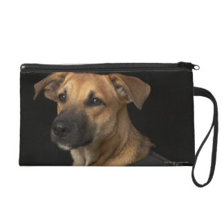 Brown rescue dog with adopt me vest wristlet