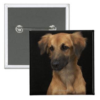 Brown resuce dog with black nose on black 15 cm square badge