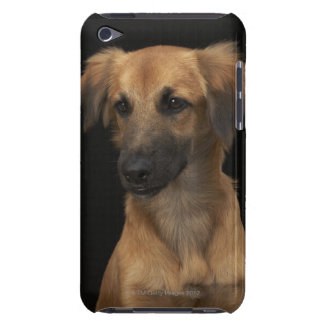 Dog Black Nose Phine Cover