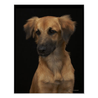 Brown resuce dog with black nose on black poster