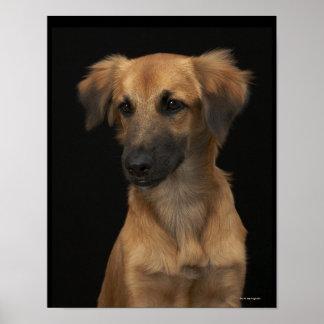 Brown resuce dog with black nose on black poster