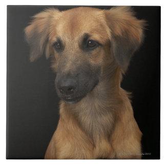 Brown resuce dog with black nose on black tile